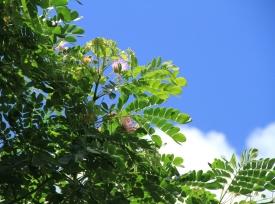 1aliimonflower