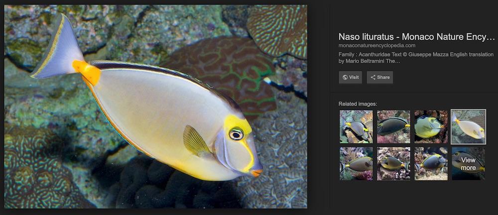 1unicornfish1