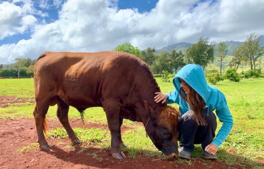 baby cow 🐂 and me 😍💛