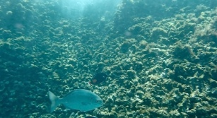 1snopeachfish1