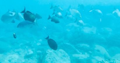 1snopeachfish12