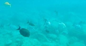 1snopeachfish13