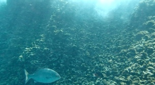 1snopeachfish2