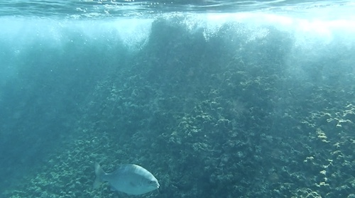 1snopeachfish3