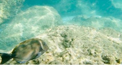 1snopeachfish6